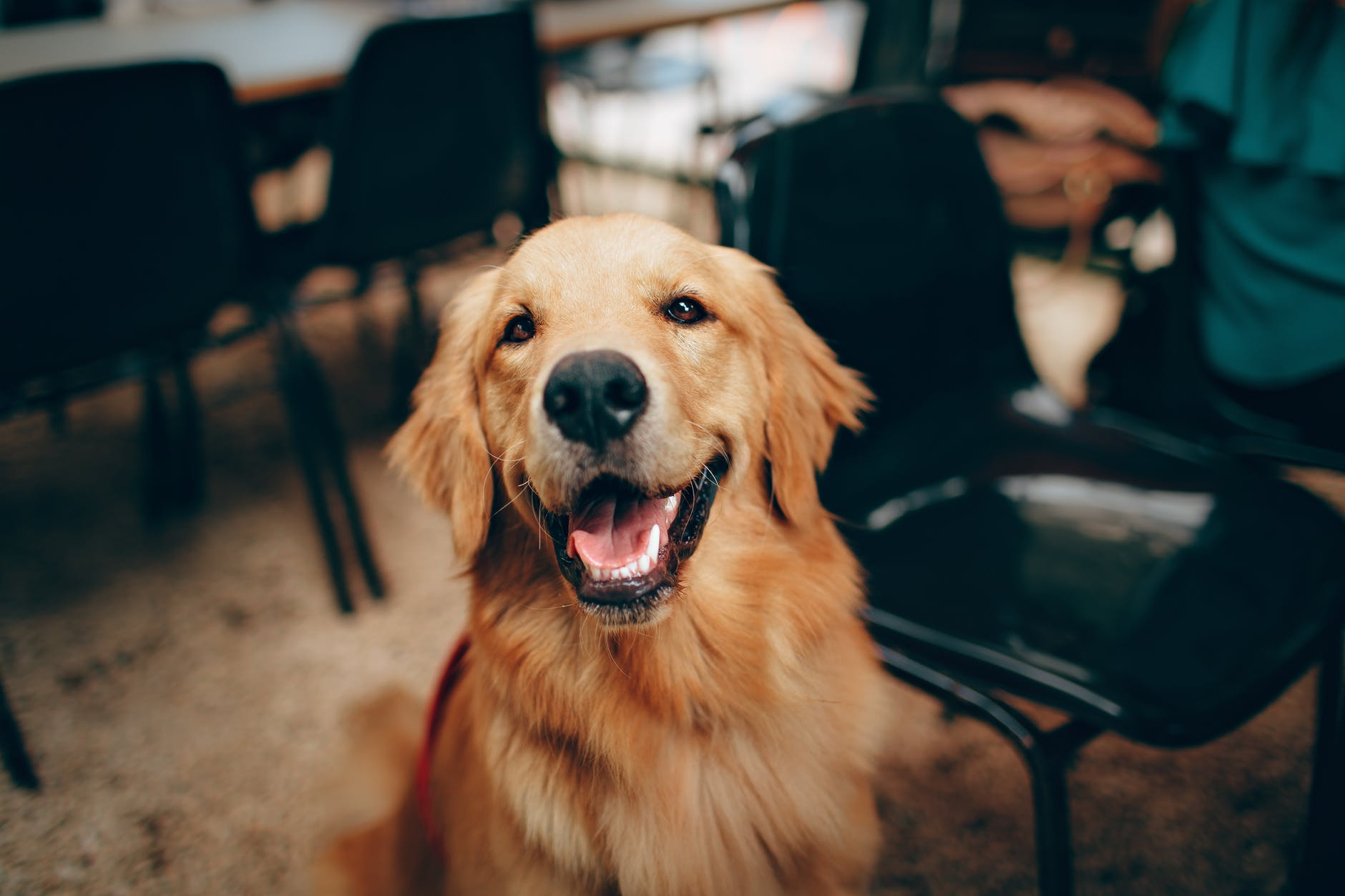 Side hustle income, Wag Walking, Dog Walking Money
